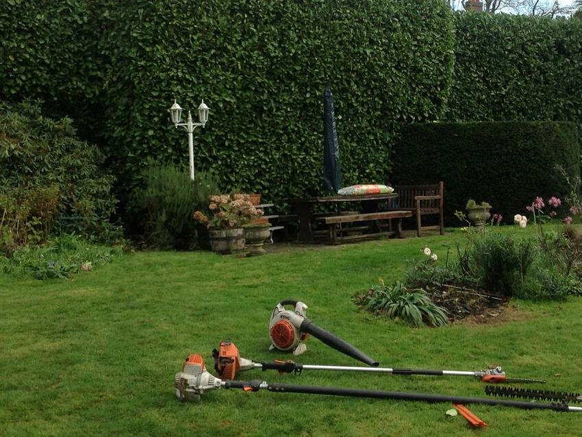 Hedge trimming Portugal laurel (Prunus lusitanica) in Canterbury