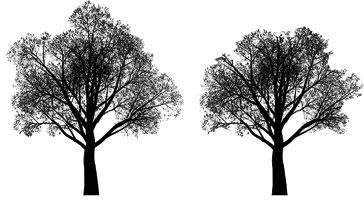 crown-reducation-trees