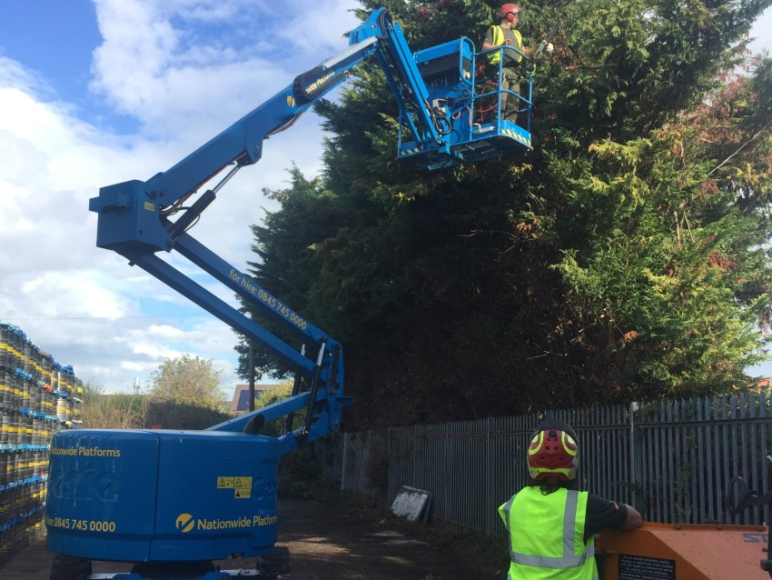 70 metre hedge reduction in Faversham using a MEWP