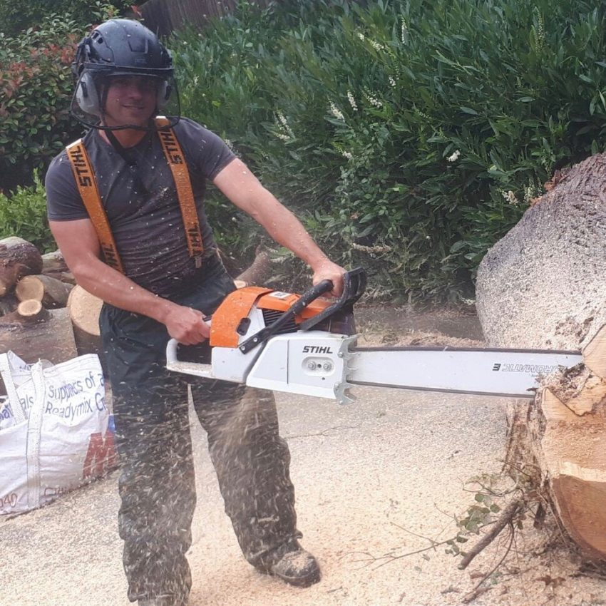 Paul Taylor – Climbing Arborist.