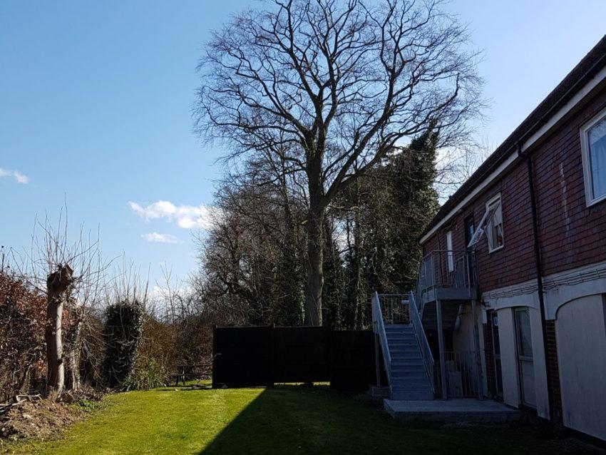 Highly praised tree surgery by industry leaders